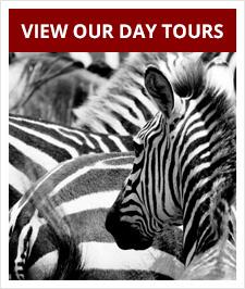 Springbok Atlas Tours & Safaris Day Tours